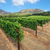 África · do · Sul · vinha · crescente · fresco · vermelho · uva - foto stock © ecopic