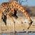 park · Namibya · su · doğa · ağaçlar · göl - stok fotoğraf © ecopic