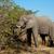 слон · Серенгети · нация · парка · тело - Сток-фото © ecopic