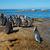 africano · par · ocidental · África · do · Sul · água · oceano - foto stock © ecopic