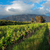 виноградник · ЮАР · красивой · пригород · Кейптаун · небе - Сток-фото © ecopic