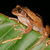 лягушка · завода · дерево · природы · зеленый · животного - Сток-фото © ecopic