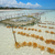 hínár · gazdálkodás · tengerparti · tengerpart · víz · felhők - stock fotó © ecopic