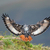 jackal buzzard landing stock photo © ecopic