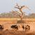 blau · Staub · sunrise · Wüste · Südafrika · Natur - stock foto © ecopic