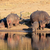 гиппопотам · Африка · декораций · Уганда · воды · природы - Сток-фото © ecopic