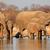 elefantii · apa · potabila · african · parc · Namibia · apă - imagine de stoc © ecopic