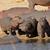 hippo family stock photo © ecopic