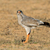 淡い · 未熟 · 砂漠 · 南アフリカ · 自然 · 鳥 - ストックフォト © ecopic