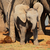 baby african elephant stock photo © ecopic