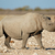 zwarte · neushoorn · lopen · zout · afrika - stockfoto © ecopic