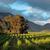 szőlőskert · Dél-Afrika · gyönyörű · külváros · Fokváros · égbolt - stock fotó © ecopic