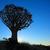 festői · fa · bokrok · sziluett · naplemente · sivatag - stock fotó © ecopic