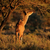 ritratto · maschio · parco · Namibia · meridionale · africa - foto d'archivio © ecopic