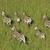山 · シマウマ · シマウマ · 南アフリカ · 公園 - ストックフォト © ecopic