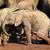 baby · afrikaanse · olifant · cute · olifant · park · South · Africa - stockfoto © ecopic