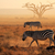 plains zebras in dust stock photo © ecopic
