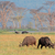 grazing african buffaloes stock photo © ecopic