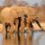 elefantii · delta · Botswana · natură · verde · grup - imagine de stoc © ecopic