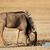 青 · 自然 · 生息地 · 徒歩 · 砂漠 - ストックフォト © ecopic
