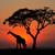 закат · дерево · африканских · парка · Кения · солнце - Сток-фото © ecopic