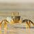 spook · krab · strand · alarm · eiland · Tanzania - stockfoto © ecopic