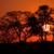 アフリカ · 日没 · ツリー · 雲 · 砂漠 · 南アフリカ - ストックフォト © ecopic