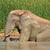 elefánt · sár · fürdőkád · afrikai · elefántok · hűtés - stock fotó © ecopic