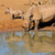 rhinocéros · sauvage · Afrique · Kenya · lac · printemps - photo stock © ecopic