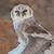 şahin · iniş · kanatlar · Güney · Afrika · Afrika · hayvan - stok fotoğraf © ecopic
