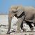 fil · safari · park · aile · seyahat · grup - stok fotoğraf © ecopic