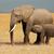 küçük · afrika · fil · savan · Botsvana · bebek · doğa - stok fotoğraf © ecopic