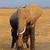 elefante · parque · Quênia · África · bebê · grama - foto stock © ecopic