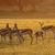 springbok antelopes at sunrise stock photo © ecopic