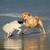 два · собаки · играет · пляж · войны · Stick - Сток-фото © ecopic