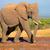 grande · elefante · africano · touro · africano · elefantes · em · pé - foto stock © ecopic