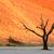 halott · Namíbia · Afrika · gyönyörű · reggel · színek - stock fotó © ecopic