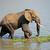 nagy · elefánt · bika · eszik · természet · tartalék - stock fotó © ecopic