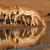 impala antelopes drinking stock photo © ecopic