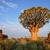 Гранит · пород · дерево · пейзаж · деревья · парка - Сток-фото © ecopic