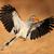 kuş · uçuş · kanatlar · Güney · Afrika · gökyüzü · mavi - stok fotoğraf © ecopic