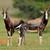 asztal · hegy · park · félsziget · Dél-Afrika · természet - stock fotó © ecopic