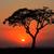 日没 · ツリー · アフリカ · 公園 · ケニア · 太陽 - ストックフォト © ecopic