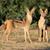 pár · Dél-Afrika · fű · természet · afrikai · szafari - stock fotó © ecopic