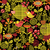 beautiful seamless pattern of pretty flowers stock photo © ekapanova