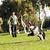 ボーダーコリー · 犬 · を実行して · 赤 · ゴム · ボール - ストックフォト © eldadcarin