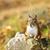 cute red squirrel closeup stock photo © elenaphoto