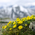 alpine · weide · park · bloemen · berg - stockfoto © elenaphoto
