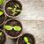 苗 · 成長 · 苔 · 木製 · コピースペース · 春 - ストックフォト © elenaphoto