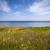 cliff edge and ocean stock photo © elenaphoto